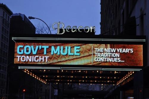 mule 1.jpg